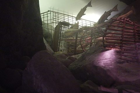 An image of the fishing weir exhibit at RBC Museum in Victoria, BC, Canada.