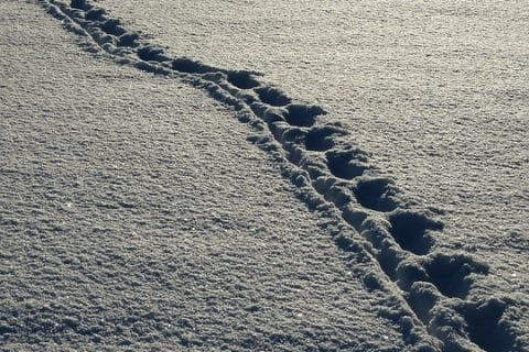 Cold Weather Footprints