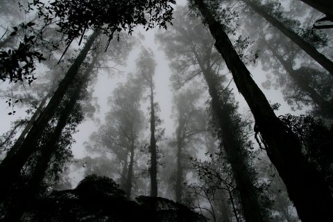 Foggy zombie forest