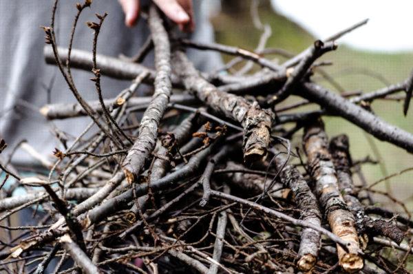 A pile of sticks for kindling