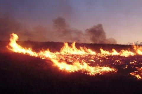 Grass fire
