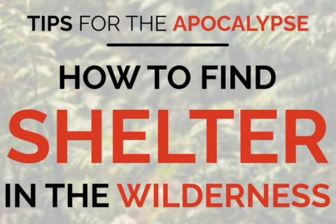 """An image of a log covered in moss. It has the words """"tips for the apocalypse: how to find shelter in the wilderness"""" overlaid on top, as well as the Total Prepare logo."""