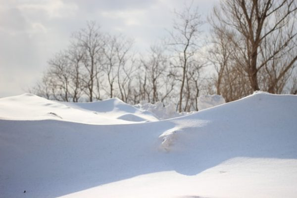 Bare trees during winter with snow banks beneath.