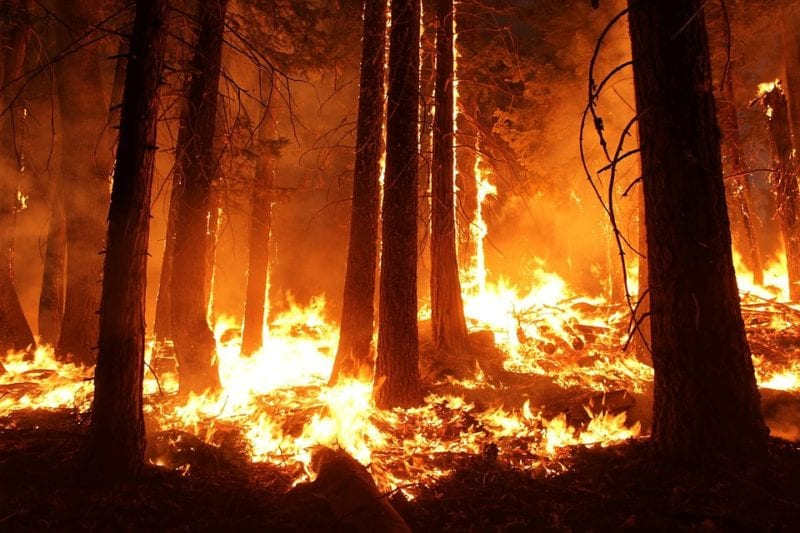 A wildfire burning through a forest